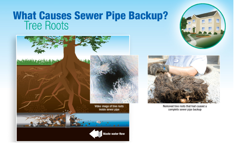 Sewer Pipe Backup